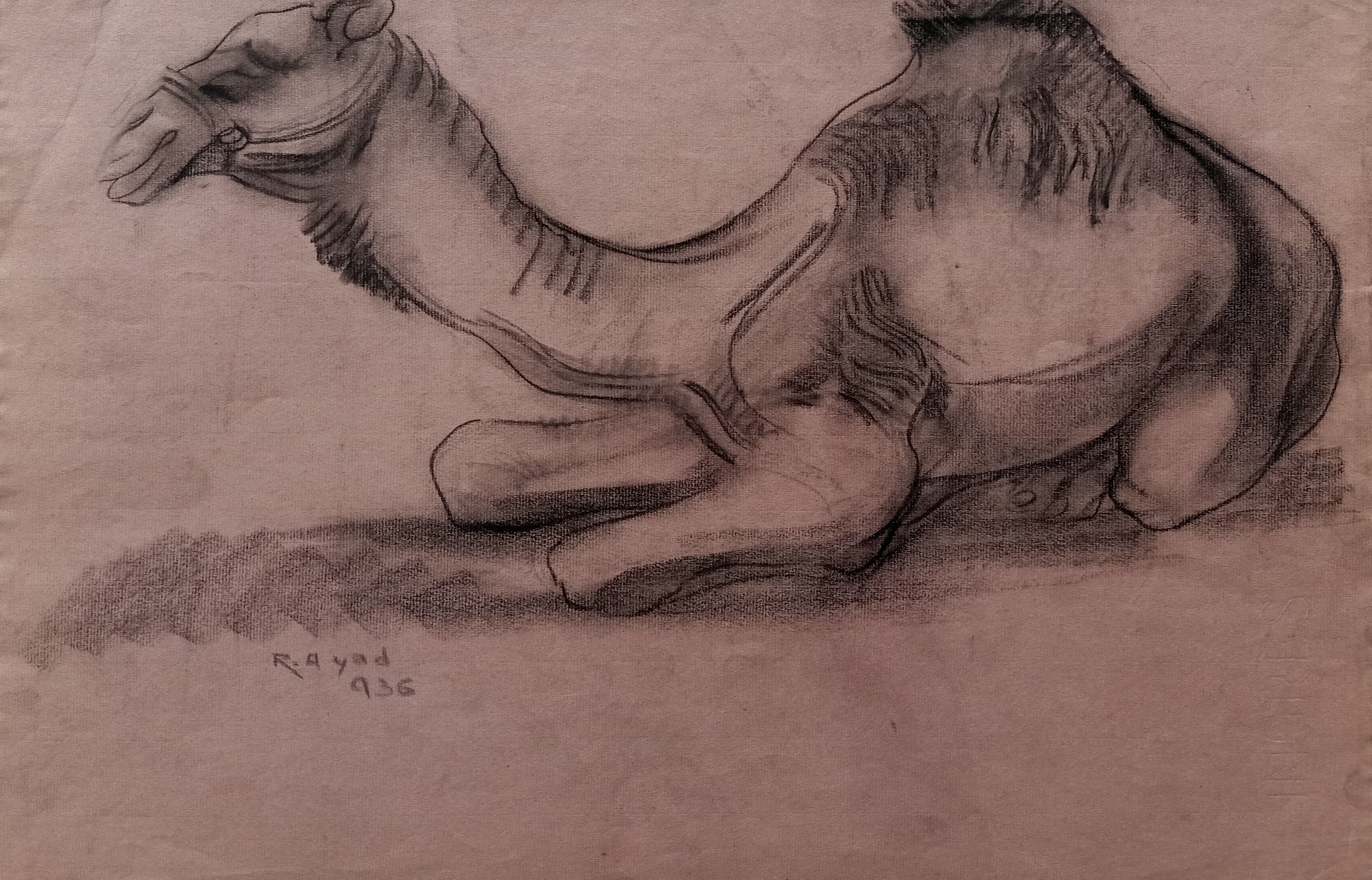 Ragheb Ayad, Sitting Camel 1936 Mixed media on paper 31×48 cm Signed and dated